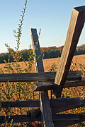 Split Rail Fence Framed Prints - Split Rail Sunny Framed Print by Wesley Kitchens