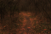 Going Green Posters - Spooky Trail Poster by Brenda Donko