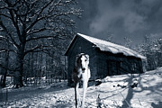 Spooky Night Prints - Spooky Wolf-like Dog In Snowy Winter Scenery Print by Christian Lagereek