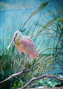 Seashore Digital Art Metal Prints - Spoonbill Metal Print by John Kain