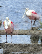 Spoonbill Framed Prints - Spoonbills Hanging Out Framed Print by Betty LaRue