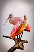 Broward Posters - Spoonbills II Poster by Debra and Dave Vanderlaan