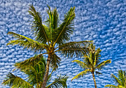 Michael Misciagno - Spotted Hawaiian Sky