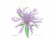 Fauna Originals - Spotted Knapweed by Donna Turbyfill