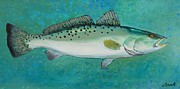 Spotted Trout Prints - Spotted Seatrout Print by Michael Cook