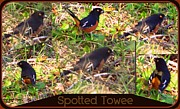 Sherry Gombert - Spotted Towee-collage