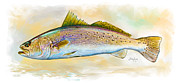 Speckled Trout Framed Prints - Spotted Trout Illustration Framed Print by Mike Savlen