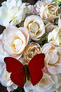 Butterfly Prints - Spray roses and red butterfly Print by Garry Gay