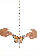 Dario Infini - Spread your Butterfly...