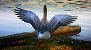 Greylag Prints - Spread Your Wings Print by Olahs Photography