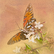 Blooms  Butterflies Posters - Spreading My Wings Poster by Betty LaRue