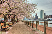 Cherry Trees Posters - Spring along the East River Poster by JC Findley