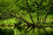 Verdant Prints - Spring along West Fork River Print by Thomas R Fletcher