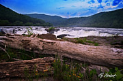 Beckley Wv Photographer Prints - Spring and Driftwood Print by Lj Lambert