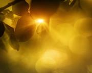 Mythja  Photography - Spring apple leaf background