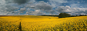 Landscape Photos - Spring at oilseed rape field by Davorin Mance