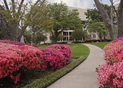 Azaleas Photos - Spring at the Courthouse by Paul Anderson