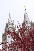 Salt Lake Framed Prints - Spring at the Temple Framed Print by Chad Dutson