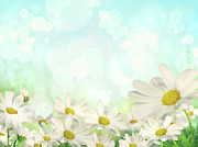 Bokeh Photo Posters - Spring Background with daisies Poster by Sandra Cunningham