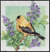 Color Image Mixed Media - Spring Birds - Goldfinch by J McCombie