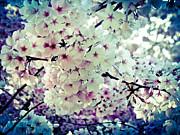 Spring Blooms I Print by Mira Dimitrijevic