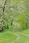 Country Lanes Posters - Spring Blossom Road Poster by Alan L Graham