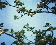 Michelle Calkins - Spring Blossoms 2.0
