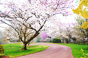 Man Cave Licensing Mixed Media Posters - Spring Blossoms in the Path Poster by Anahi DeCanio