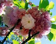 Spring Blossoms Print by Karin Kohlmeier