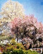 Marty Koch - Spring Blossoms