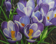 Yellow Crocus Prints - Spring blossoms Print by Veikko Suikkanen