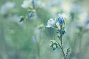 Springtime Photos - Spring Blues by Priska Wettstein