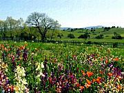 Spring Bouquet At Rusack Vineyards Print by Kurt Van Wagner