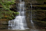 Water Falls Photos - Spring Buds by Dale Kincaid