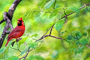 Backyard Digital Art Framed Prints - Spring Cardinal Framed Print by Darren Fisher