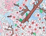 Cherry Blossoms Drawings Metal Prints - Spring Cherry Blossoms  Metal Print by Raquel