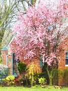 Houses Art - Spring - Cherry Tree by Brick House by Susan Savad