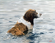 Springer Spaniel Paintings - Spring cleaning by John Silver
