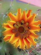 Kate Farrant - Spring Color- Orange Flower