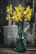 Spring Daffodil Flowers Print by Edward Fielding