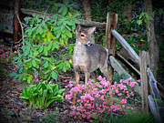 Crystal Joy Photography - Spring Deer