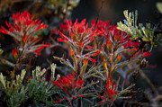 Spring Dew Paintbrush Print by Eric Rundle