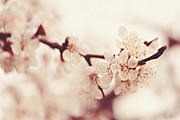 Beautiful Tree Photos - Spring by Diana Kraleva