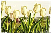 Pink Tulip Flower Prints - Spring Down on the Farm Print by Edward Fielding
