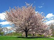 Juergen Roth - Spring Dream