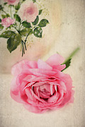 China Rose Prints - Spring Elegance Print by Darren Fisher