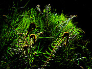 Steve Battle - Spring Ferns