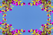 Tim Hester Prints - Spring Flower Frame Print by Tim Hester