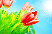 Valentine Art - Spring flowers background by Michal Bednarek