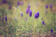 Purple Flower Photos - Spring Flowers by Diana Kraleva